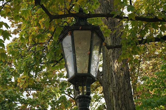 lampa u stromu