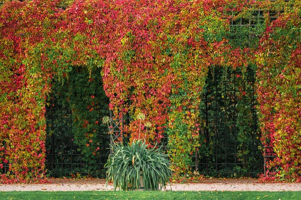 Proč umístit na svou zahradu právě pergolu? Jaké má výhody?